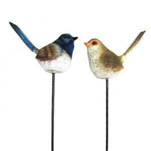 Fairy Wren Birds on Stick