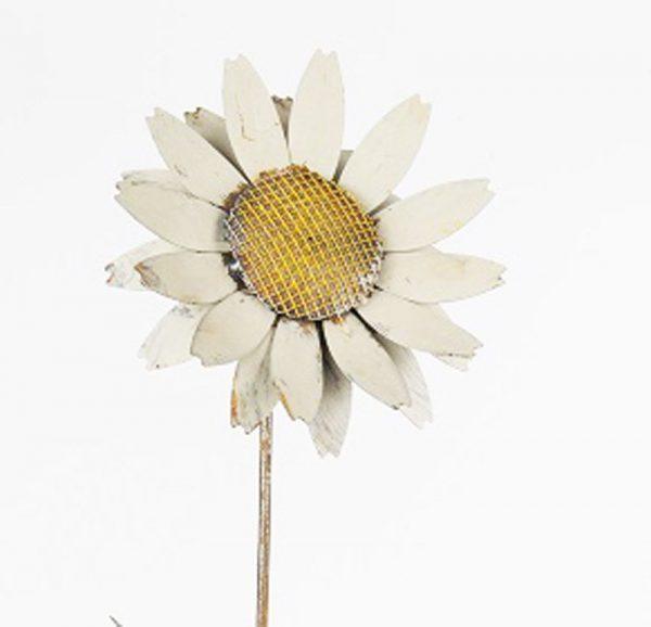 8657 White Daisy 45