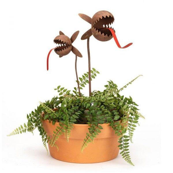 Carnivorous rusty plant