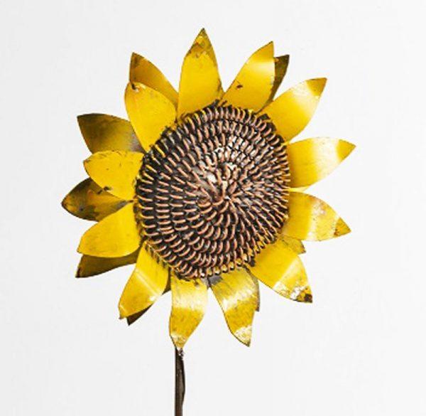 Close up Yellow Sunflower Sml 79 Lrg 110