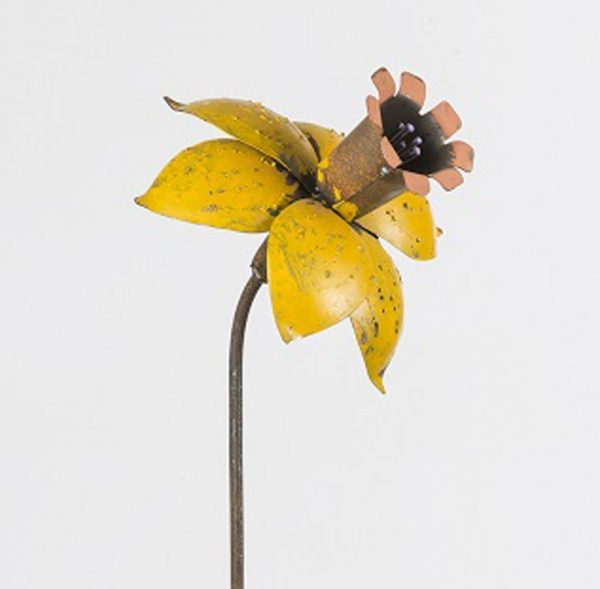 Closeup Yellow Daffodil 45