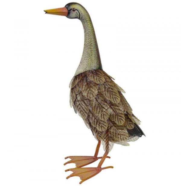 Feathered Mrs Duck