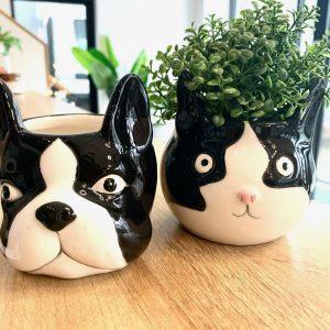 Bulldog and Cat Succulent Pots