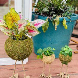 Kokadame Moss Bird Feet Planter