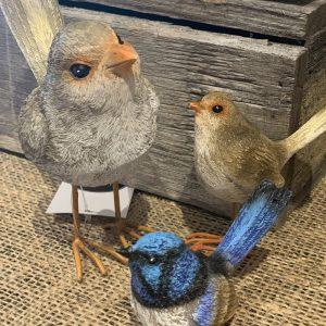 Fairy Wren Birds