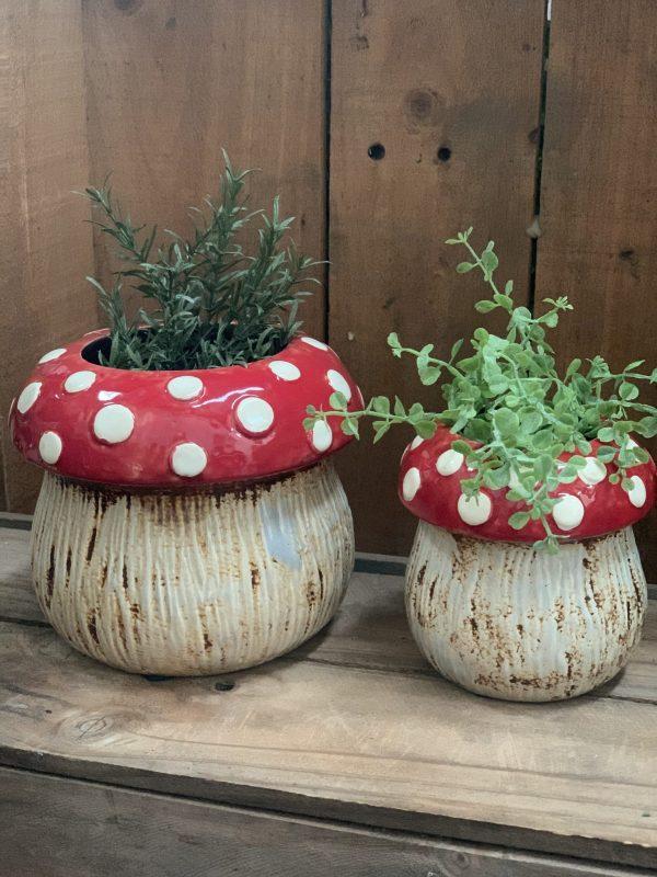 Mushroom pots 4 e1591698850600 scaled 1