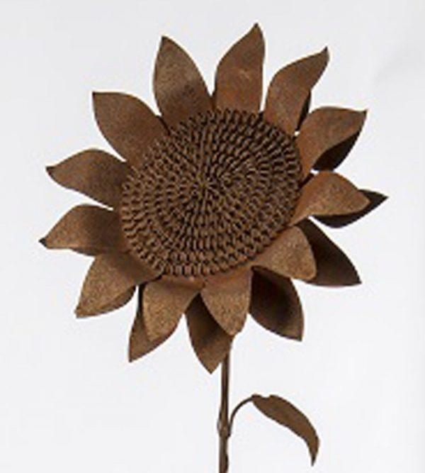 Rusted Sunflower Head
