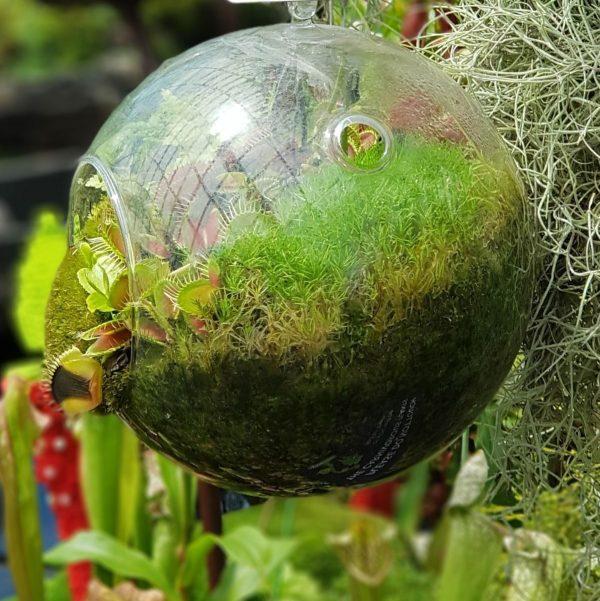 gt15a xl plant life01