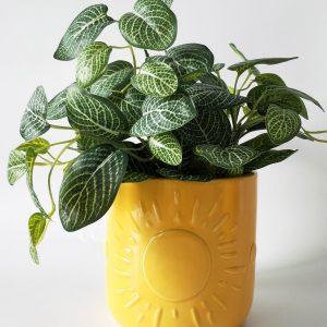 Elemental Sun Planter