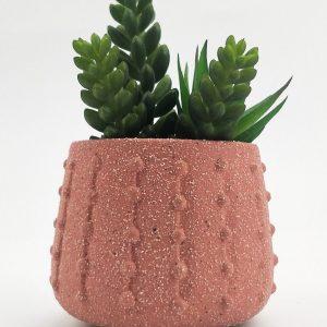 Cacti Pheobe Planter